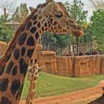 Tiere im Bioparc ganz nah erleben mit der Familie