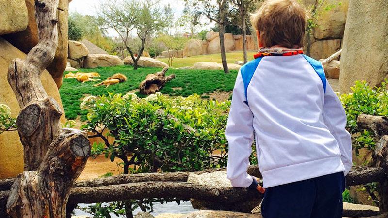 Der Löwe im Bioparc