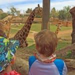 Tiere im Tierpark/Bioparc